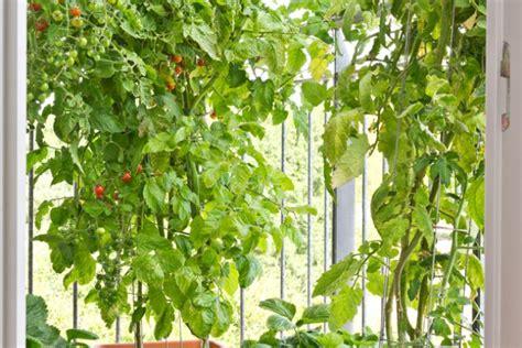 creare un orto in giardino come creare un orto giardino donnad