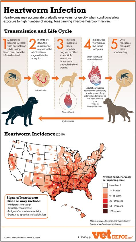 heartworm prevention heartworm transmission cycle and incidence in the us