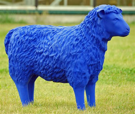 Blue Sheep by File Blue Sheep 05 Jpg Wikimedia Commons