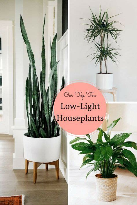 house plants for low light best 20 low light houseplants ideas on pinterest indoor