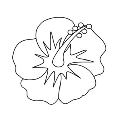 yellow hibiscus coloring page hawaiis state flowers colouring pages