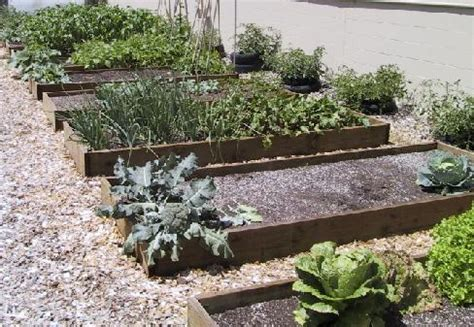 Laying Out A Vegetable Garden Vegetable Garden Layout