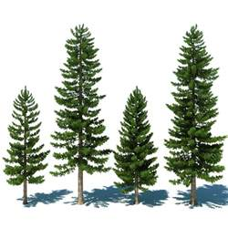 How To Make A Pine Tree Out Of Paper - 3d pine tree