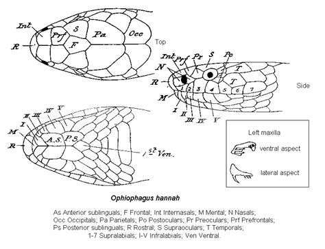 Nesting Panci Cing By Den k 246 nigskobra