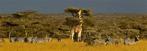 best to best cing tours kenya best tour companies in kenya