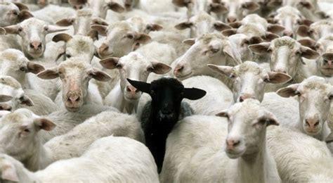 imagenes ovejas negras blancas pudimos ser eternos