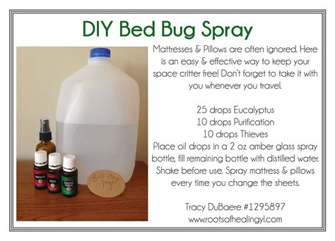 how to get rid of bed bugs fast naturally get rid of bed