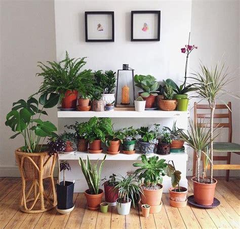 indoor plant ideas 356 best indoor plant ideas images on pinterest indoor