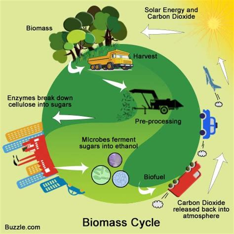 contoh biofuel utterly stunning facts about biomass energy