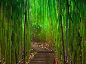 bamboo wallpaper bamboo wallpaper border