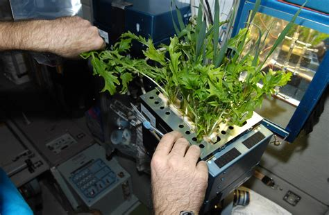 lada per coltivazione a brief history of plant habitats in space astrobotany