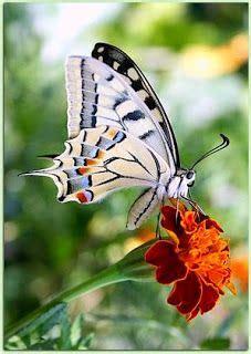 le schmetterling les plus beaux papillons du monde je trouve 231 a tr 232 s