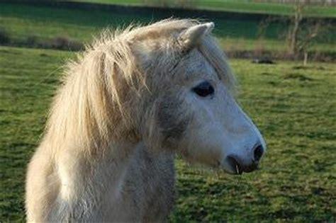 pferde suchen ein neues zuhause pferde suchen ein zuhause vermittlung pferden markt de