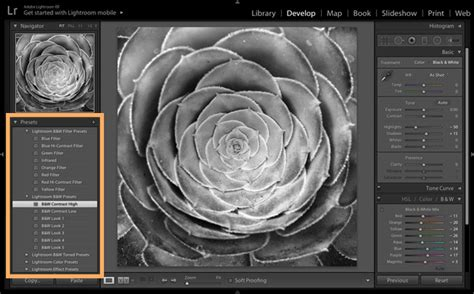 adobe photoshop tutorial black and white stunning black white photos adobe photoshop lightroom