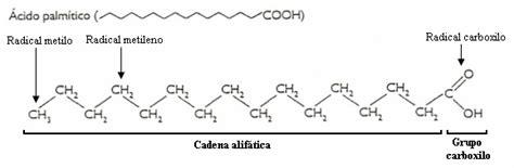 cadenas alifaticas definicion 193 cidos grasos l 237 pidos