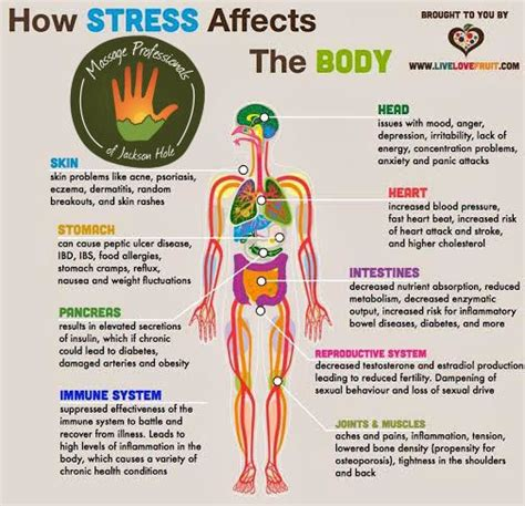 the stress test how pressure can make you stronger and sharper books 17 best ideas about physical stress on