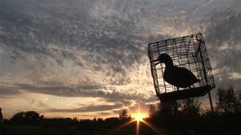 hutte chasse chasse 224 la hutte au gabion