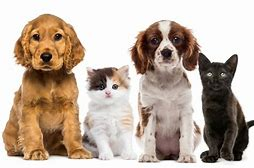 Image result for pet-supplies
