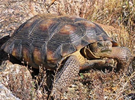 imagenes animales que viven en el desierto animales del desierto de chihuahua animalesde net