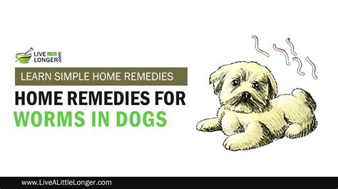 home remedies to get rid of worms in dogs quickly dogs