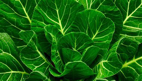 5 big reasons to eat leafy greens studies show health