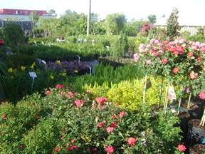 ta flowering plants bushes and shrubs keep it green