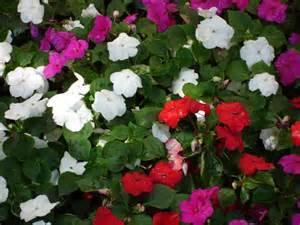 annual flowers birmingham michigan total lawn care inc full lawn maintenance lawn