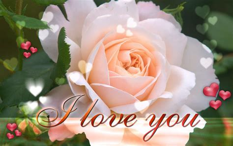 wallpaper flower romantic new latest i love you wallpapers on this valentines day 2016