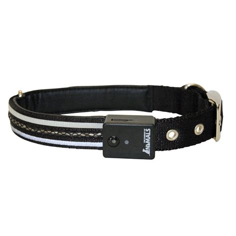 safety collar buy company of animals safety collar