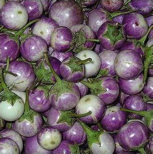 Bibit Terong Hijau Bulat jual benih terong bulat ungu lihat kebunku