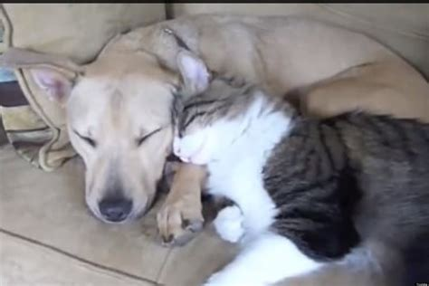 cat and cuddling 10 dogs and cats cuddling