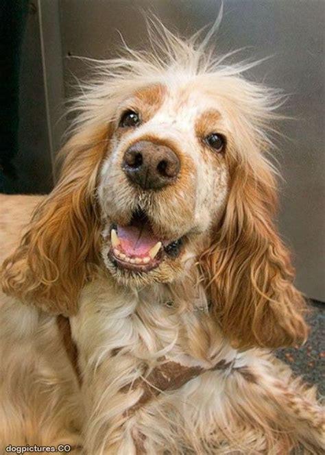 black spikey fur dog spikey hair dog pictures