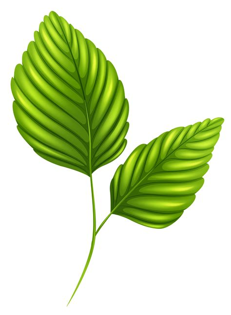 leaf clipart leaves clipart png clipartxtras