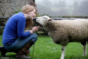 Sheep Barns Keith The Lamb Abandoned And Taken In To Live With