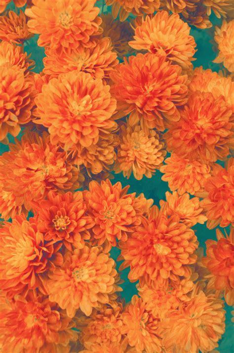 nature pattern tumblr hipster vintage design orange flowers nature pattern