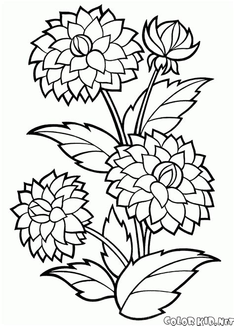 Flowers Color Pages by Coloring Page