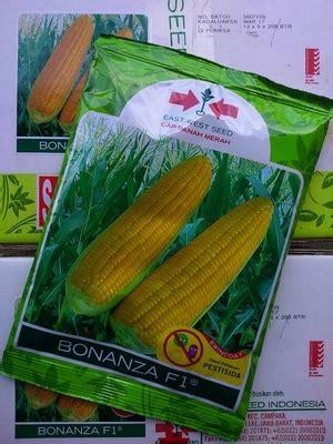 Bibit Jagung Manis Jambore jual bibit benih jagung manis bonanza 200 gram dadi makmur