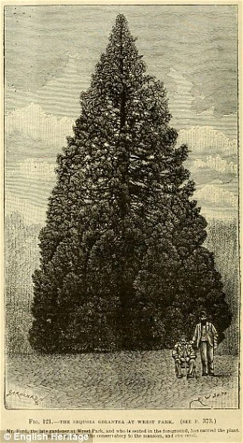 is this the oldest christmas tree in britain daily mail