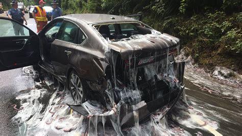 slime eels explode  highway  bizarre