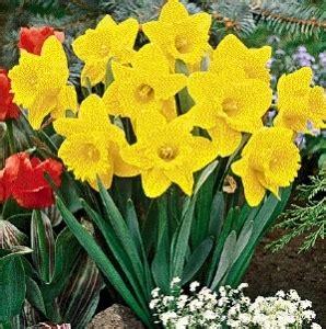vanitoso significato narciso linguaggio dei fiori narciso linguaggio dei