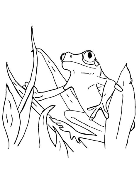Red Eye Tree Frog Coloring Pages Coloringstar Eyed Tree Frog Coloring Page