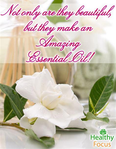 Gardenia Essential 8 Benefits Of Gardenia Essential Healthy Focus
