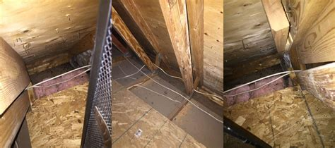 insulation   Mouse infestation cleanup advice   Home