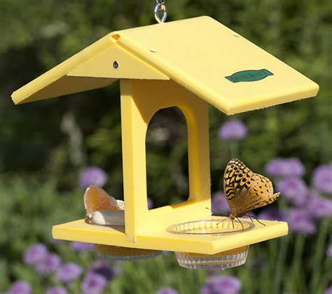 Butterfly Feeders duncraft duncraft eco butterfly feeder