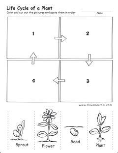 free printable animal life cycle worksheets plant life cycle worksheet kindergarten worksheets for all
