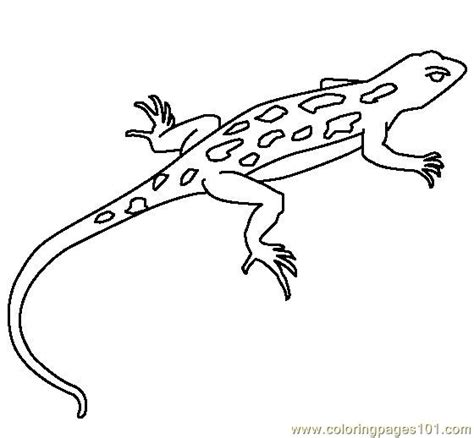printable reptile images coloring pages lizard reptile gt lizard free printable