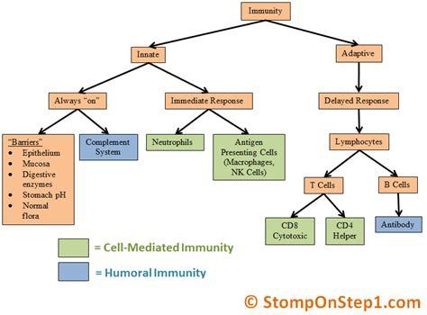 immune system flowchart immune system cells chart www pixshark images