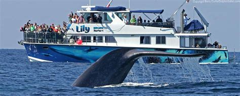 capt dave s whale safari with underwater viewing