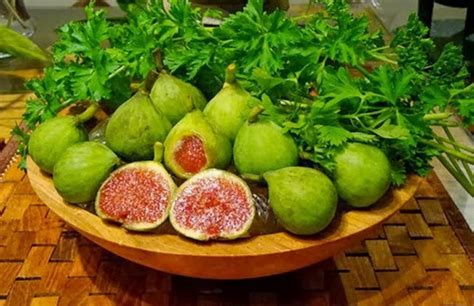 Buah Yang Bagus Buat Diet cara mudah budidaya buah tin dan langkah langkah merawatnya 187 jempolkaki