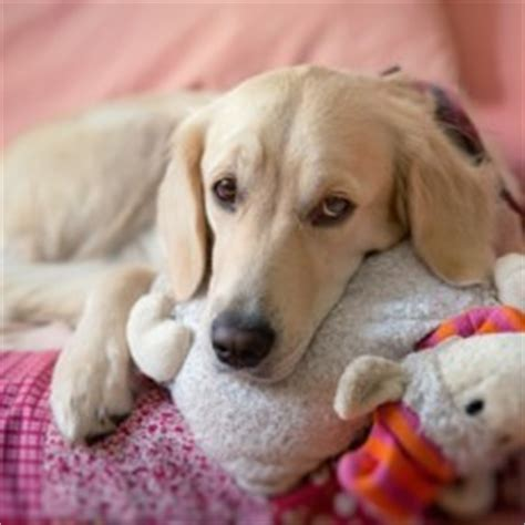 severe separation anxiety in dogs 7 tips for helping ease your s separation anxiety